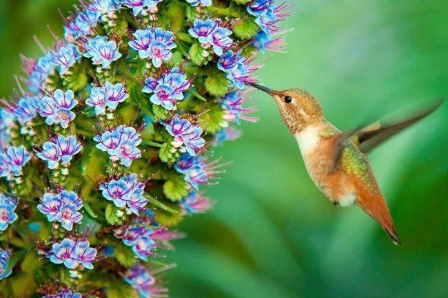 Красивые птиц цветов