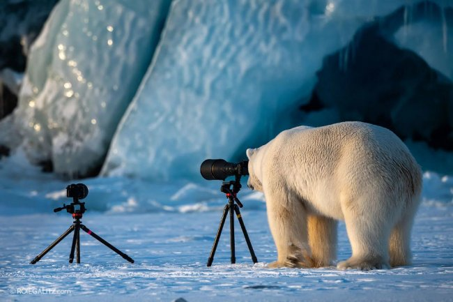 Финалисты конкурса Comedy Wildlife Photography Awards
